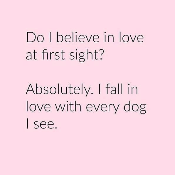 Do I Believe In Love At First Sight Dogsblue Heeler Dogs Dog