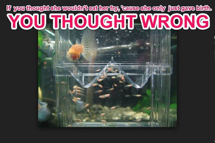 Pin by Frank Mineo on Fish memes | Tropical fish aquarium ...