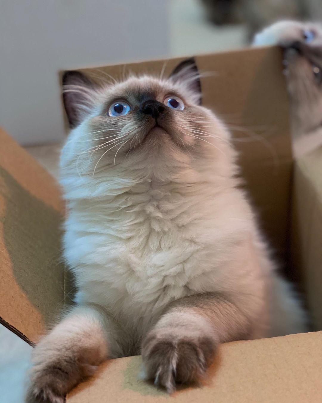 اللي ورا ياليت تفسر لي طعم الكرتون لفو الصوره Cat Catoftheworld Memes Catmemes Catsoftheweek Catsofin Cats Animals