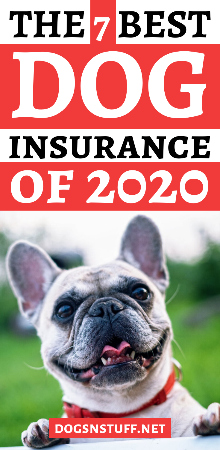 How to Find the Best Dog Insurance Dogs, Dog insurance
