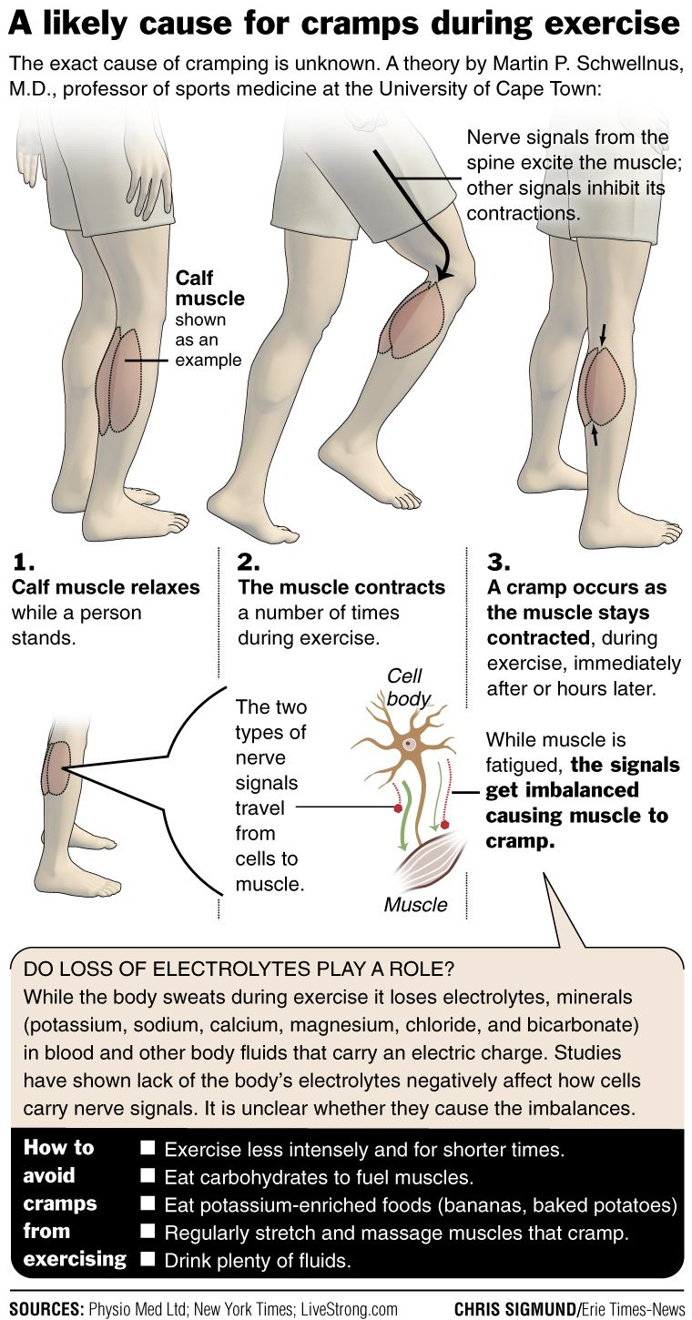 Mixed Nerve Signals In Muscles Might Cause Cramps University Of