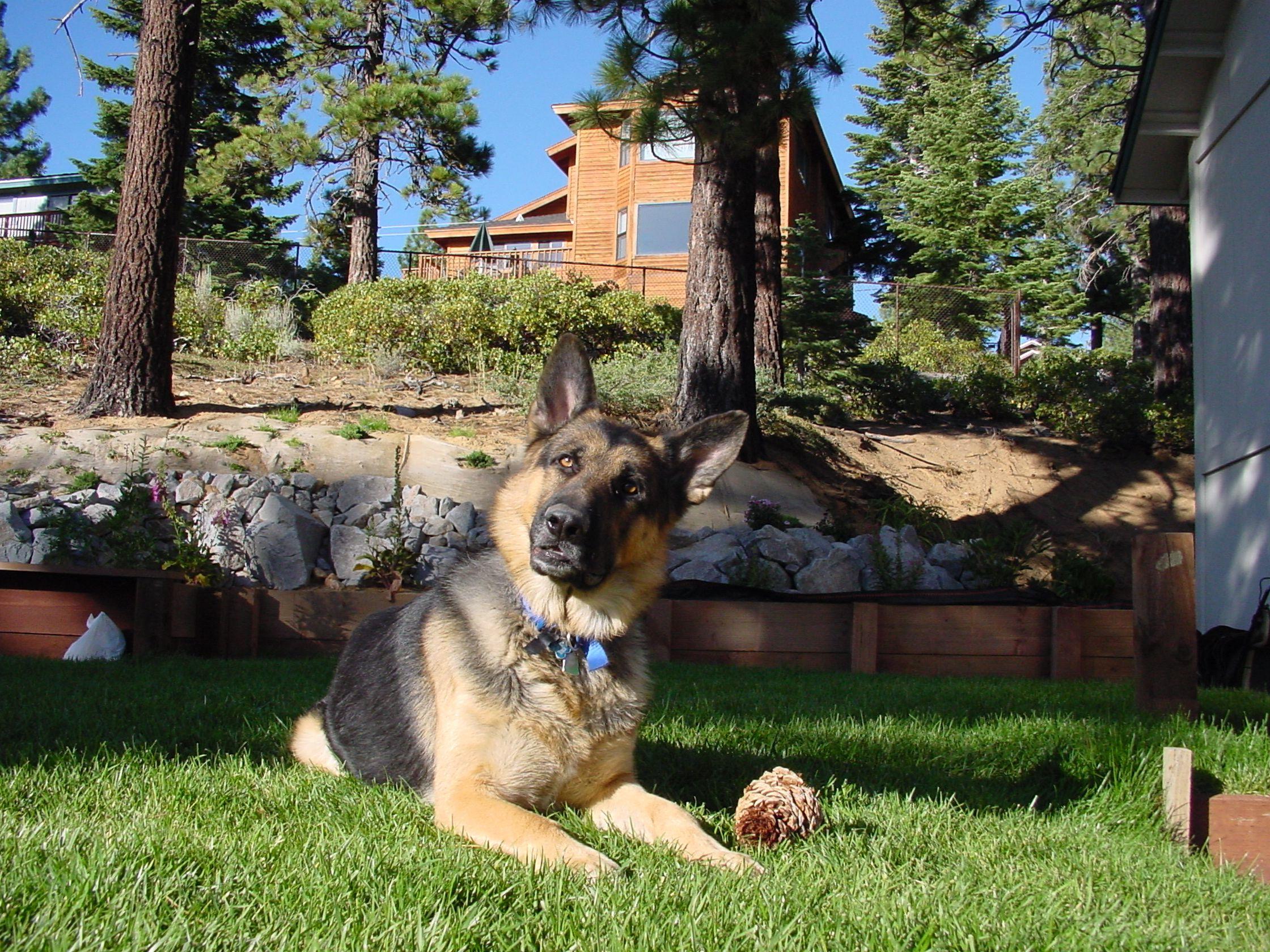 Tahoe Keys Resort South Lake Tahoe South Lake Tahoe Pet Friendly Cabins Lake Tahoe