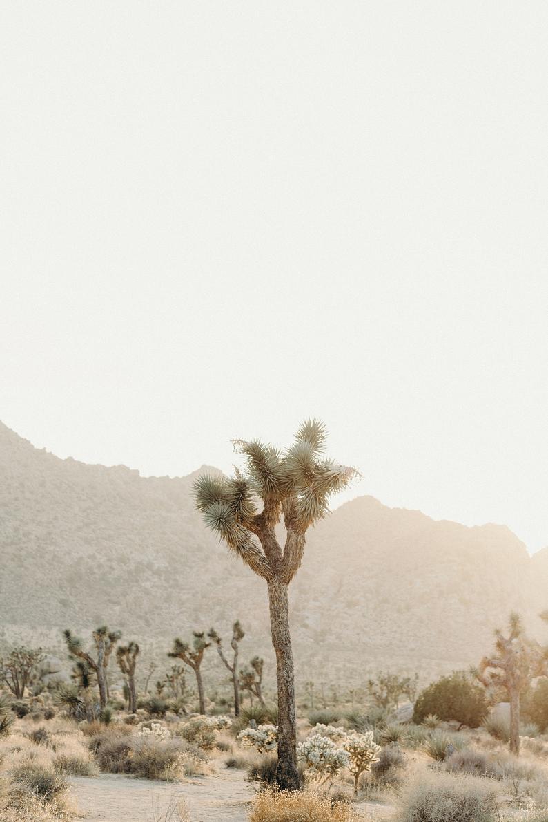 A Single Joshua Tree Etsy In 2021 Joshua Tree Location Photography Beach Print