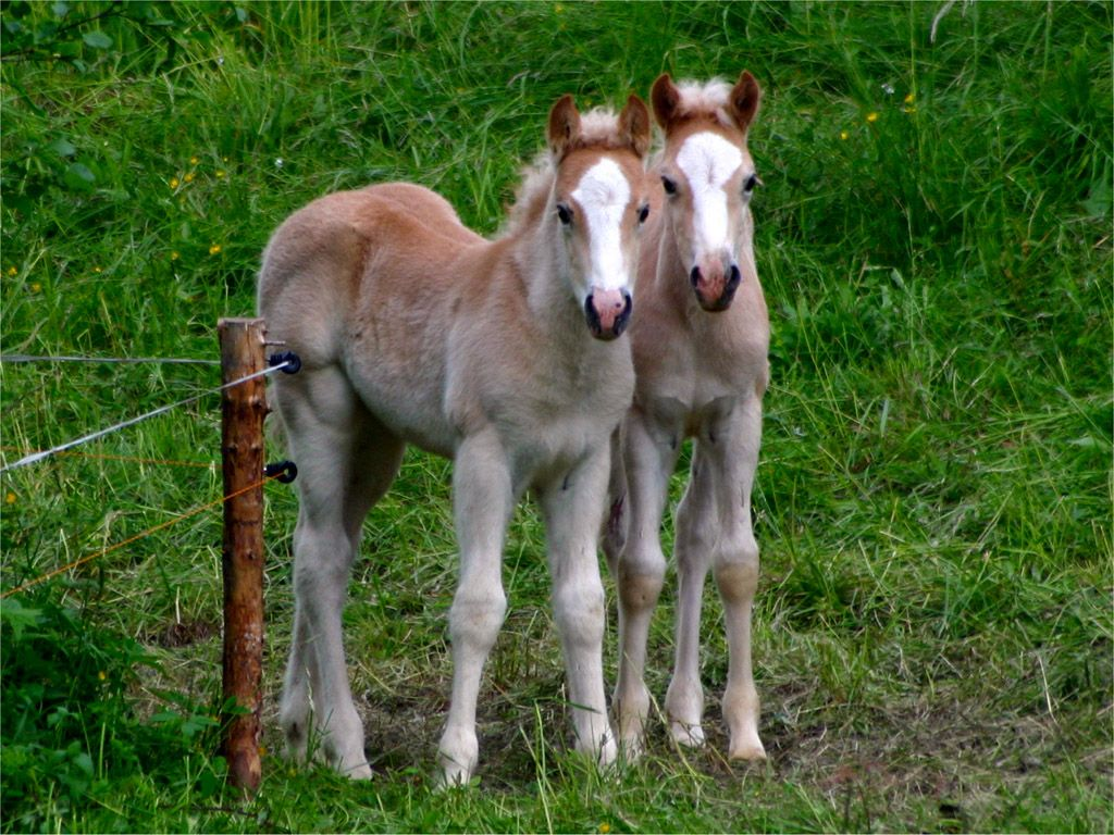 palomino foal - photo #14