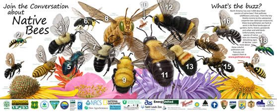 One of my favorites- great bee poster! Environmental Education