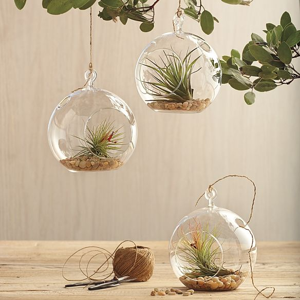 WANT. Glass globe plants.