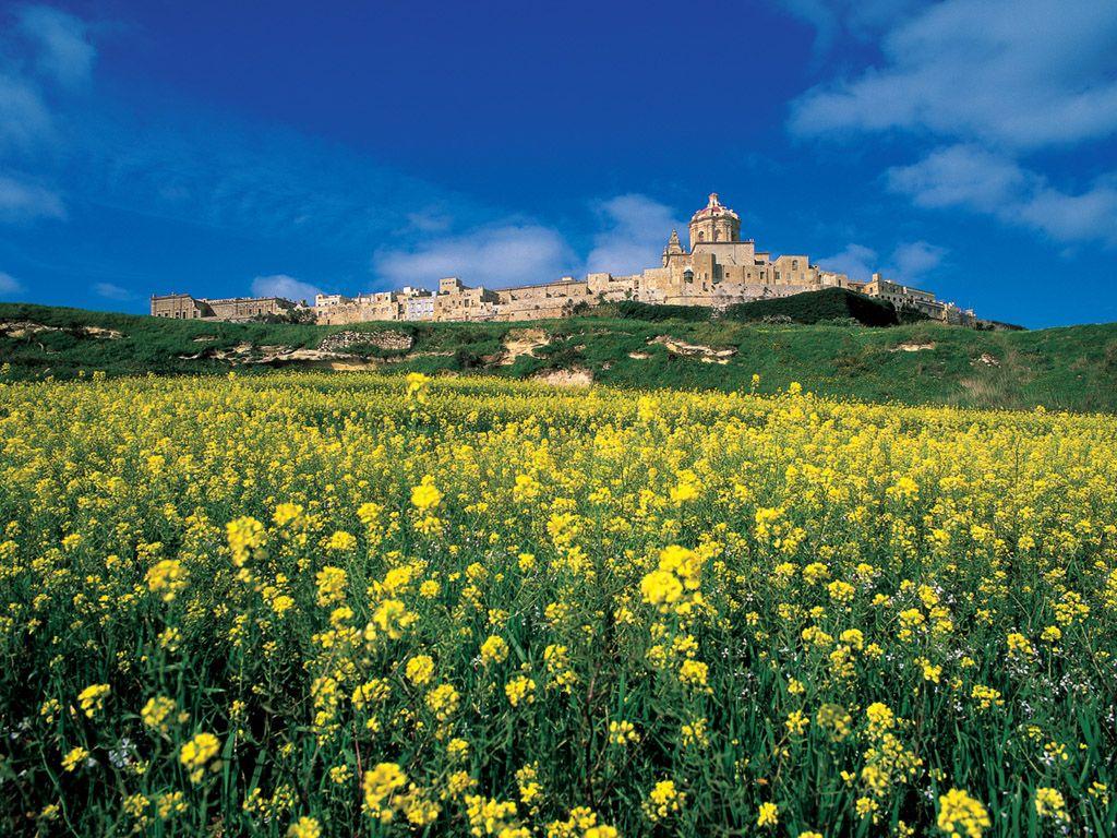 Bij Fontanella Tea Garden, Mdina op Malta de lekkerste