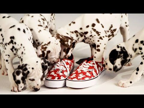 Get Ready For More Disney And Vans With 101 Dalmatians Alice And