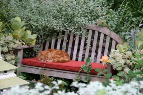 Super Napping On A Garden Bench Napping Garden Bench Cat Inzonedesignstudio Interior Chair Design Inzonedesignstudiocom