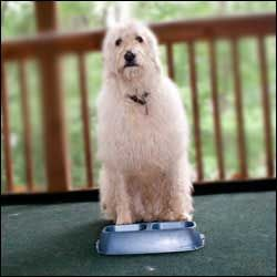 Teach Your Dog To Get Its Dish