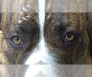 View Breeder Profile Dogo Argentino Dog Breeder Near Texas