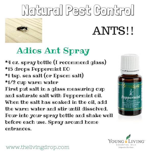 Ants Hate Peppermint! Natural Pest control!