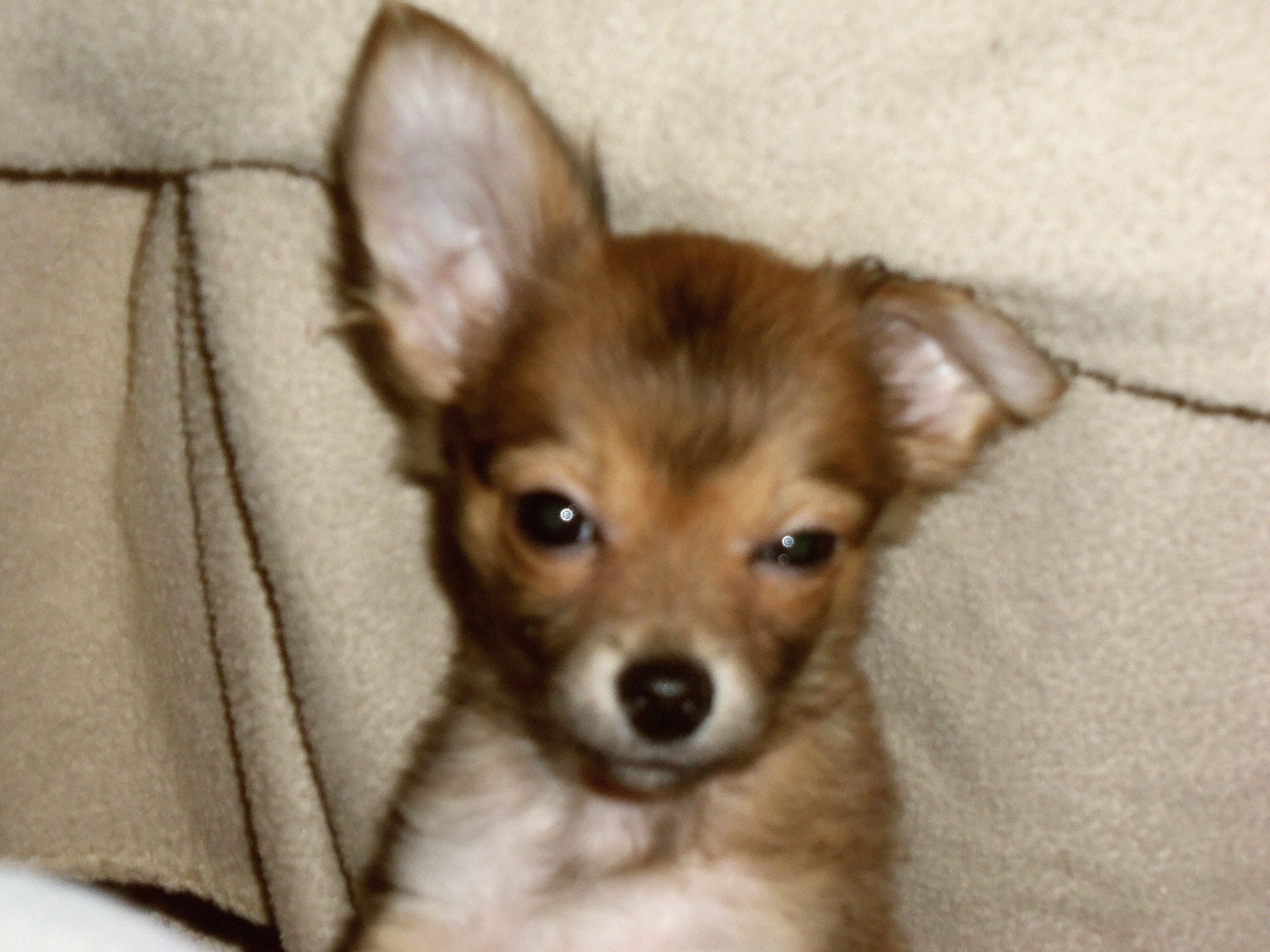 so   s l e e p y....                  My Lil Rudy when he was a baby.