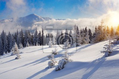 Wall mural - Winter in the mountain forest - year