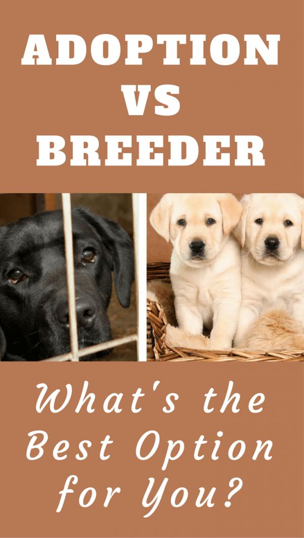 Adoption From Shelter Vs Buying From A Breeder What S Best For You Labrador Retriever Labrador Puppy Labrador