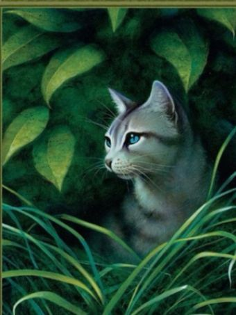 Graystripe is a solid dark gray tom with a stripe of darker gray fur running down his back, a...