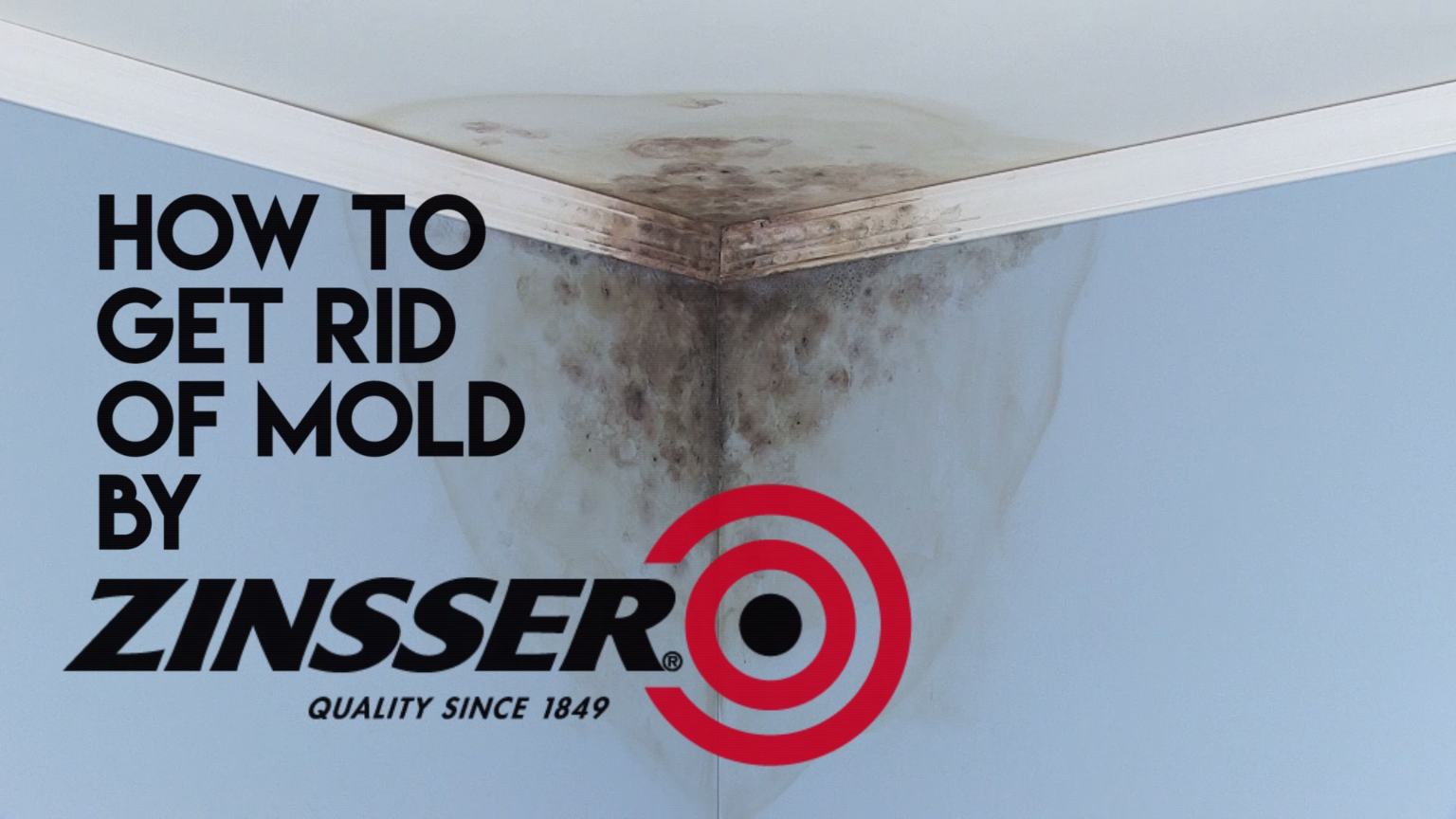 Mold On Walls It S Easy Just Ly Zinsser Killing Primer An Epa Registered Wall Remover That Kills Existing Mildew And Odor
