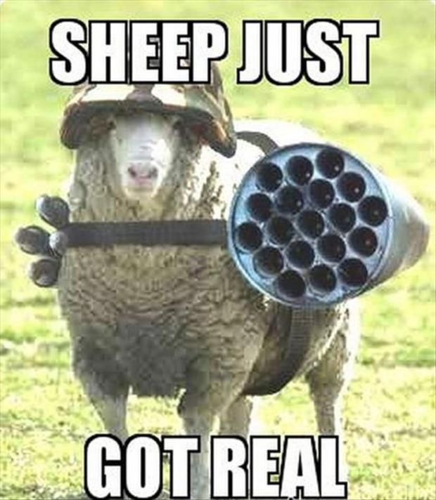 Dump A Day Funny Animal Pictures Of The Day 20 Pics Funny Sheep Funny Animal Pictures Funny Animals