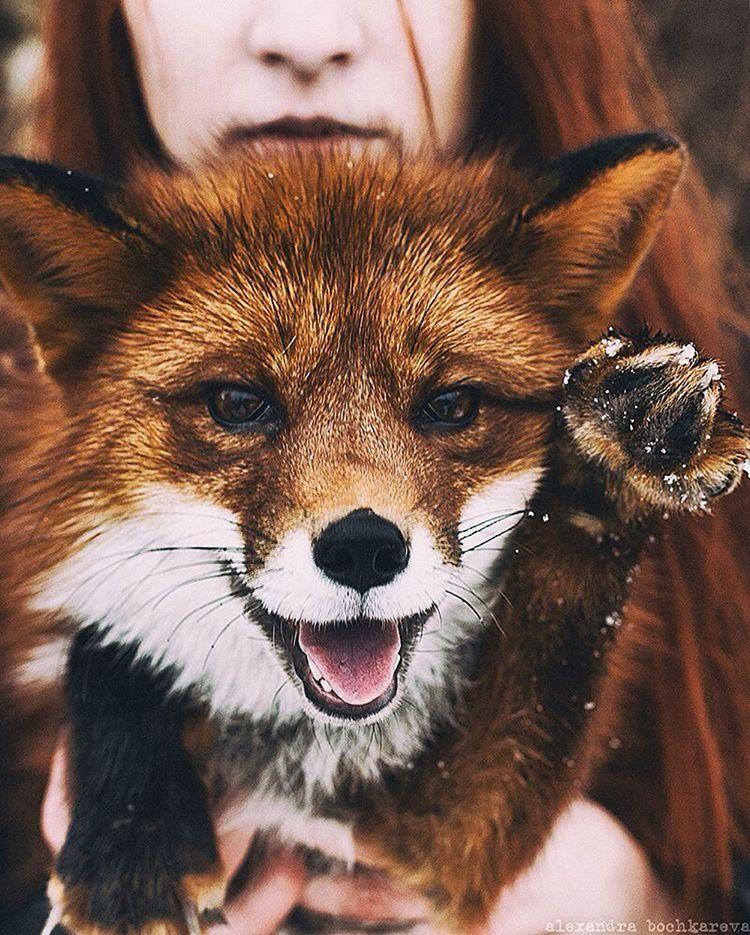 Everything Fox Everythingfox Photo By Alexandra Cute Baby Animals Animals Wild