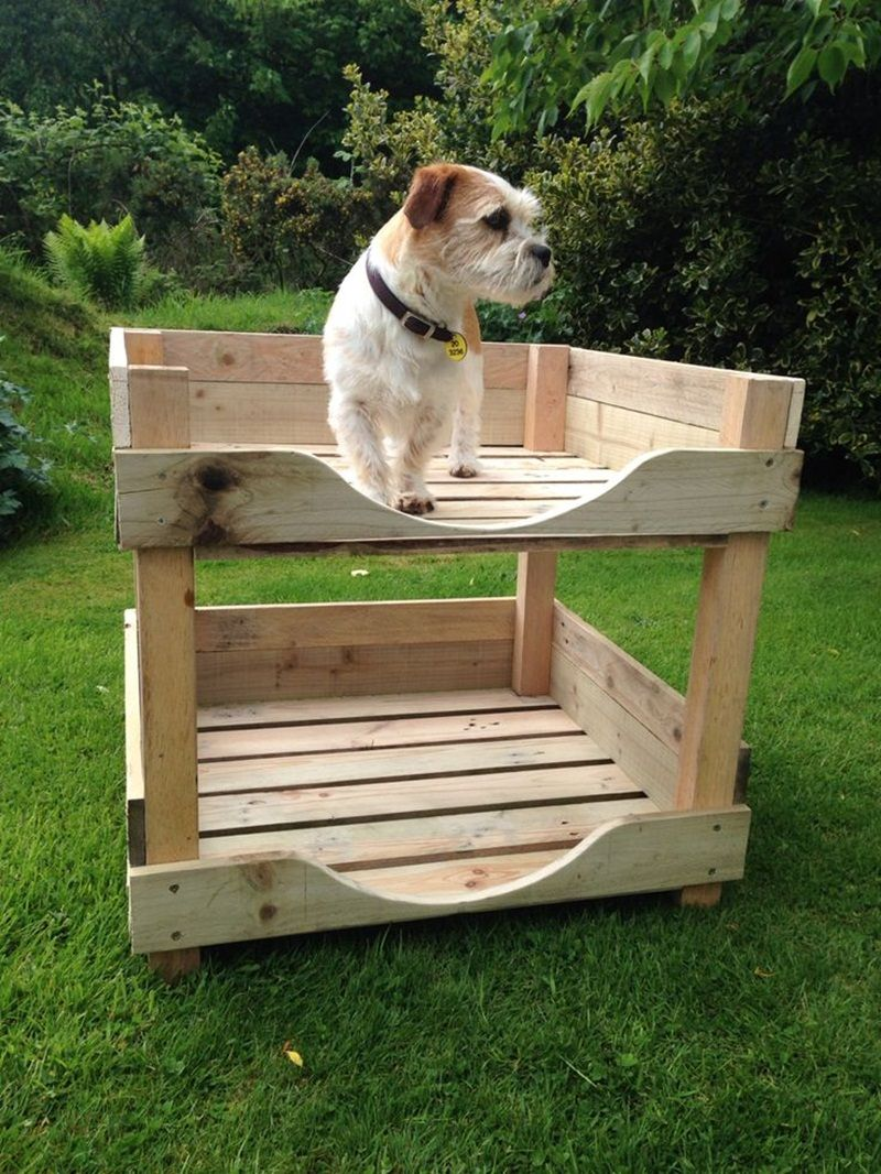 DIY Dog Bunk Beds Dog bunk beds, Elevated dog bed, Diy