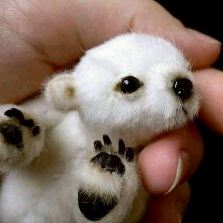 Tiny baby polar bear