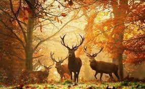 Afbeeldingsresultaat voor herfstbladeren achtergrond
