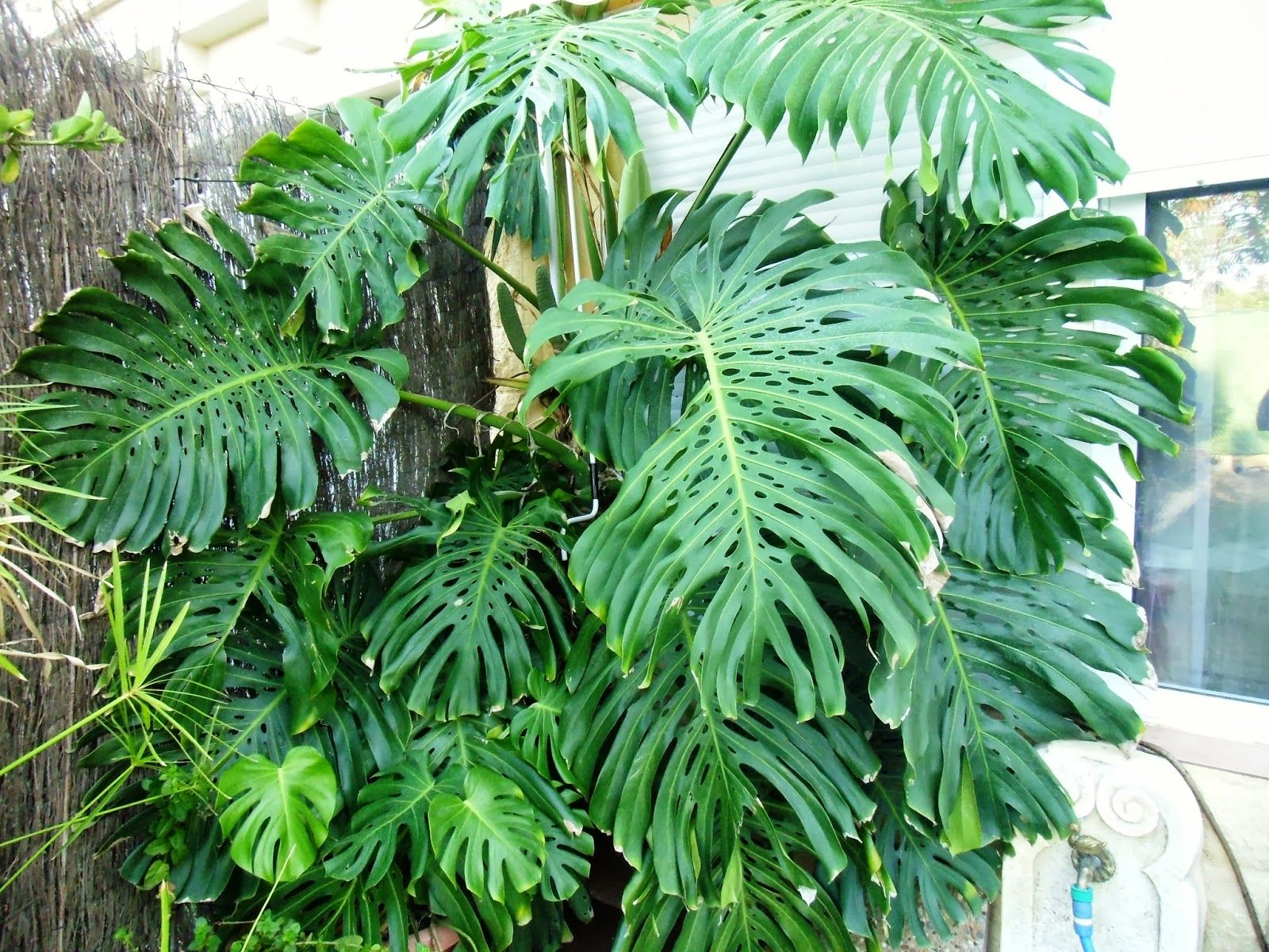 Pirestet ideas para el hogar y el jardin jardin for Hogar y jardin