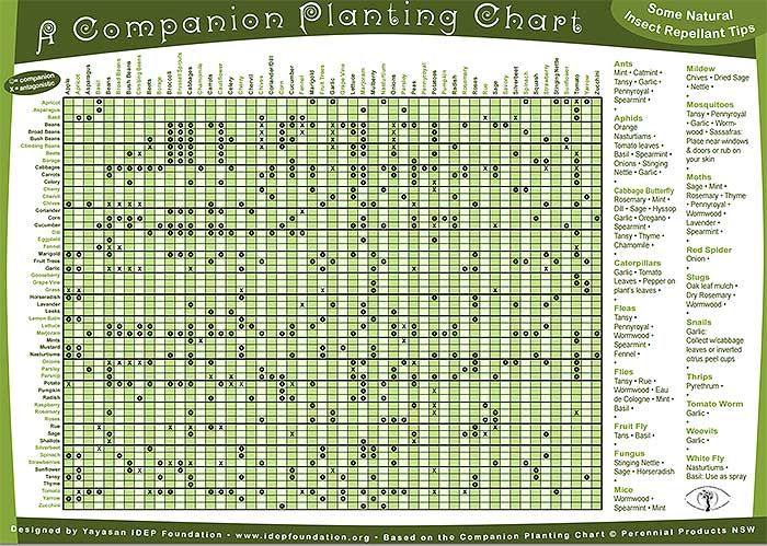 Permaculture Companion Planting Guide Chart Free Pdf  Garden