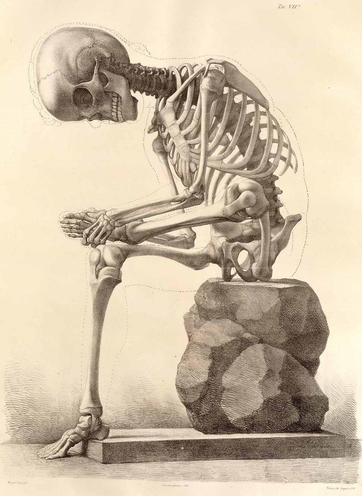De cráneo: Elementos de anatomia fisiologica aplicados a las bellas ...
