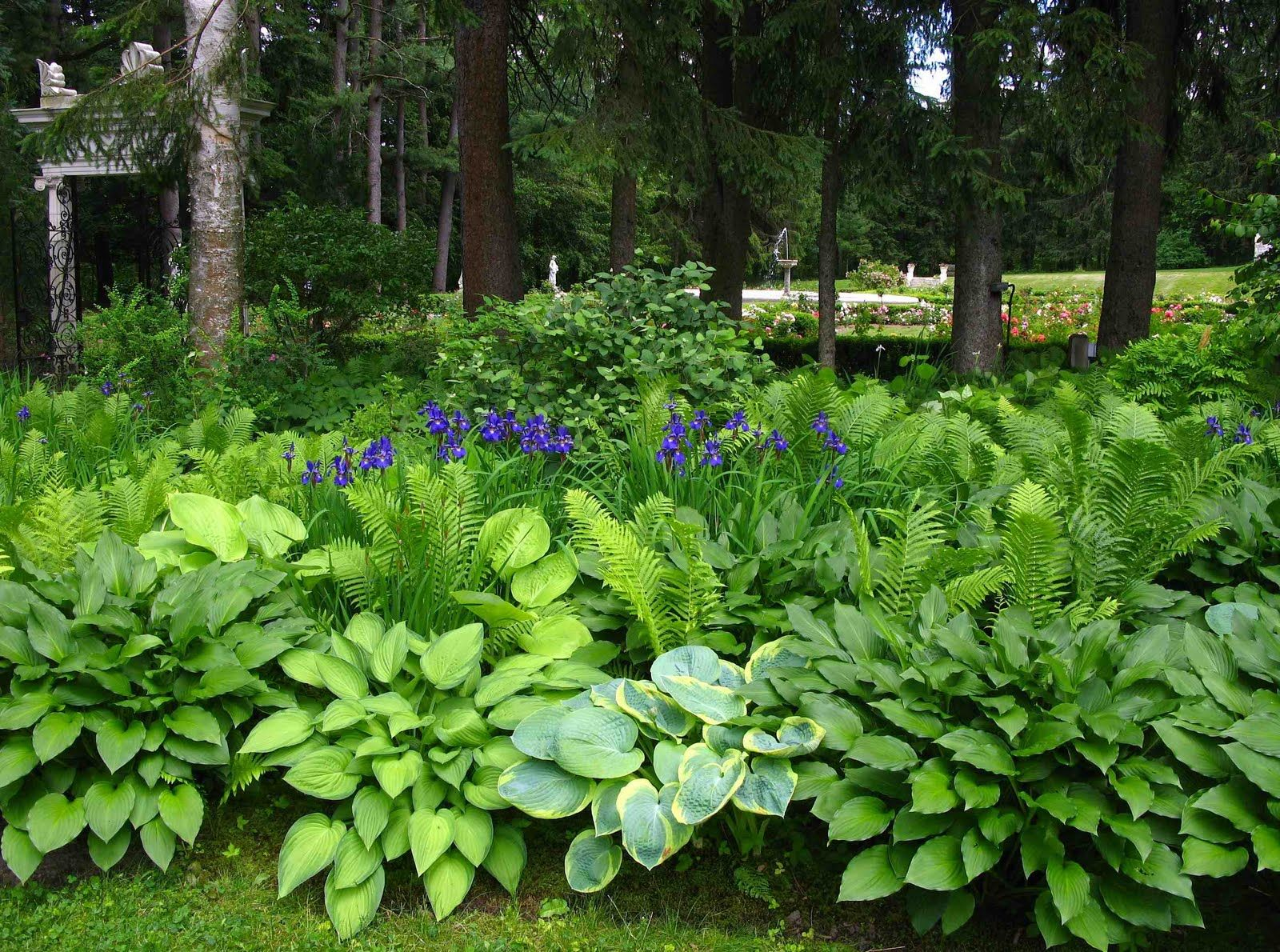 Shade Loving Bushes And Shrubs Irises Accented The