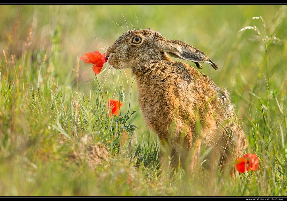 Flowerpower by Christian Roeschert