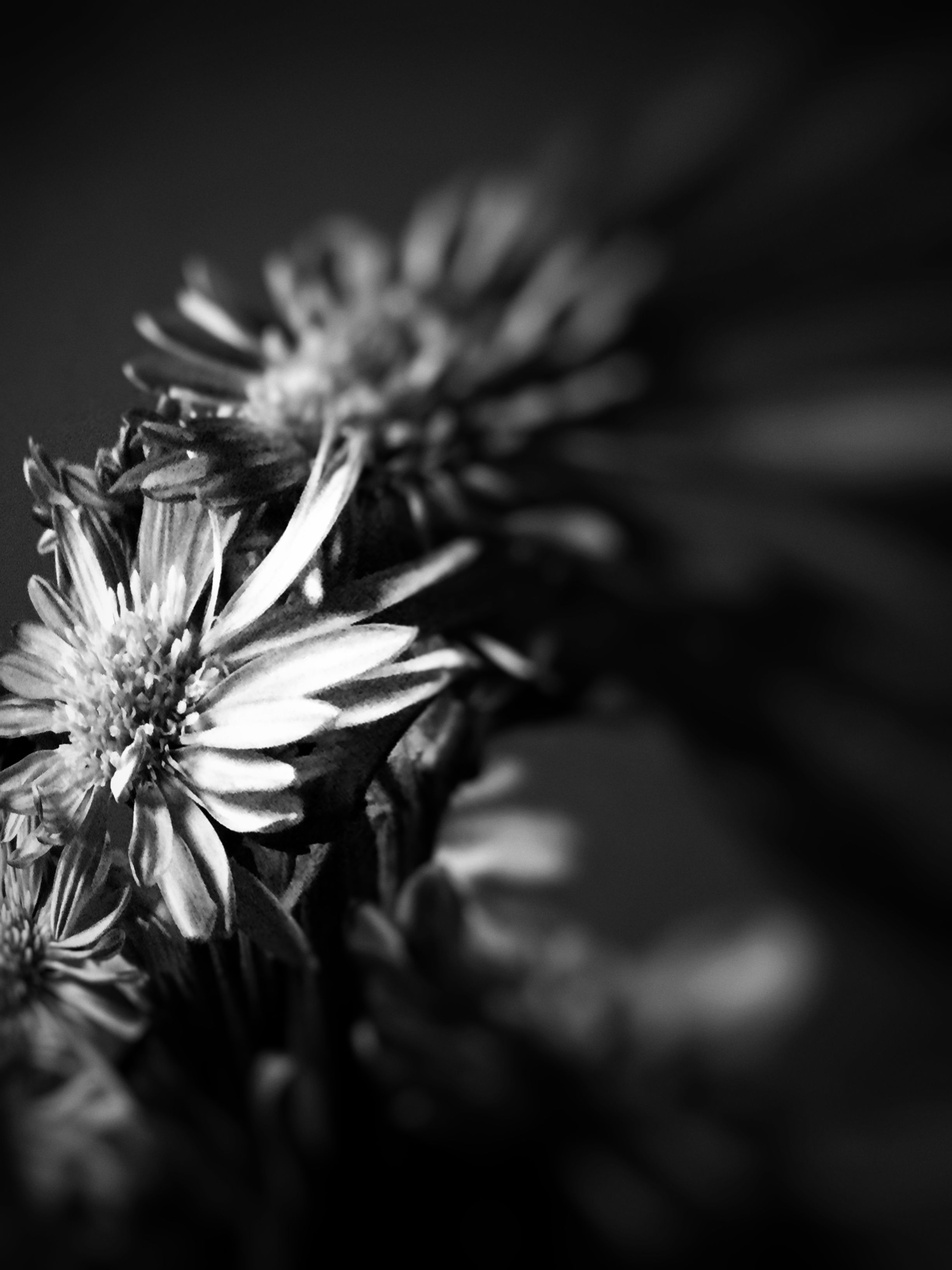 Moody black and white photograph of flowers photography black