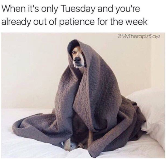 Its Already Tuesday Meme