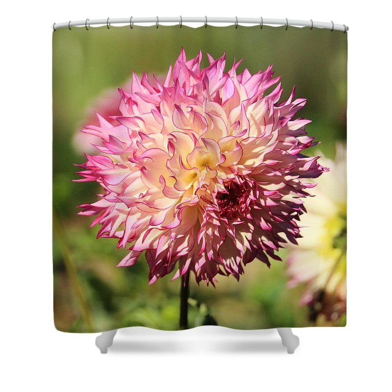Pink And White Dahlia Shower Curtain For Sale By Karen Silvestri