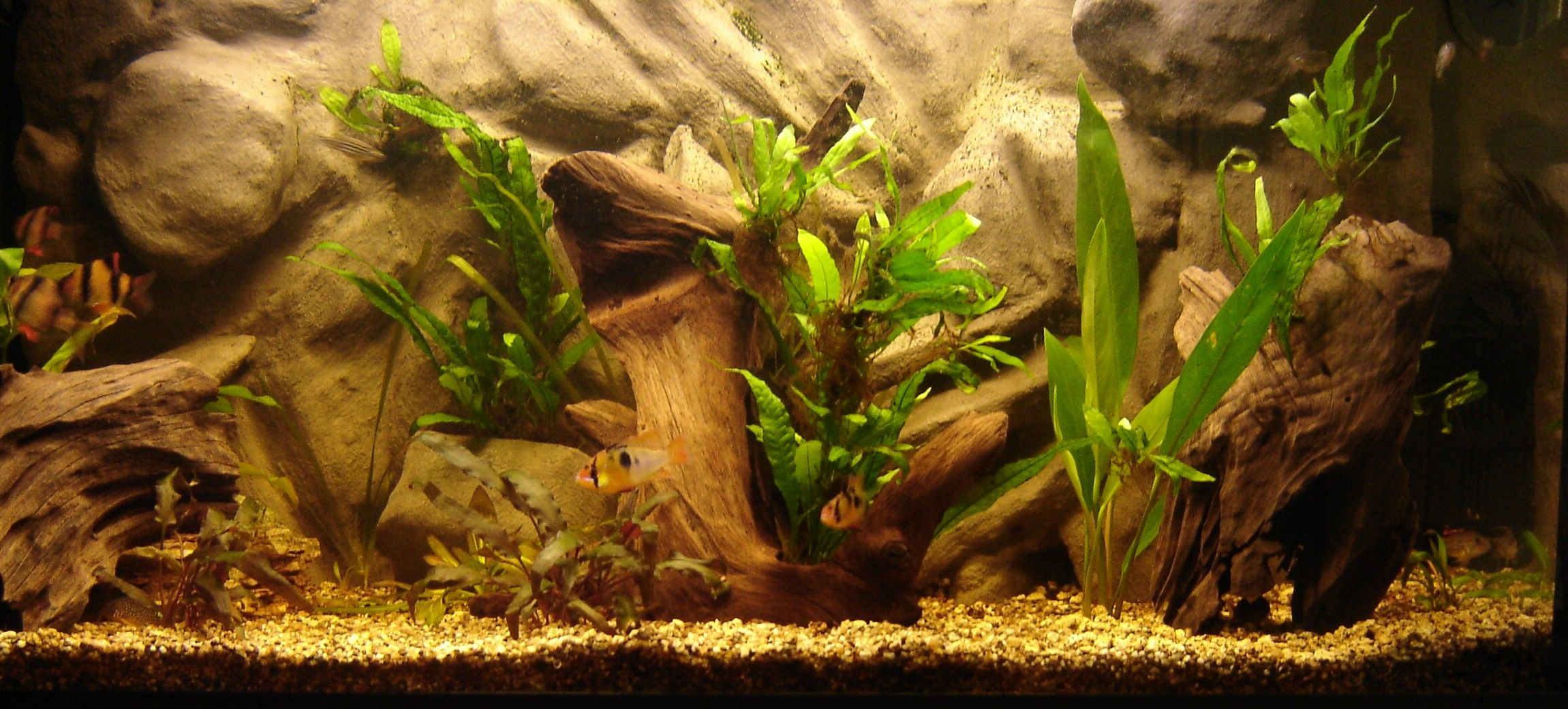 Image Result For Free Printable Reptile Tank Backgrounds Aquarium Backgrounds Reptile Tank Fish Tank