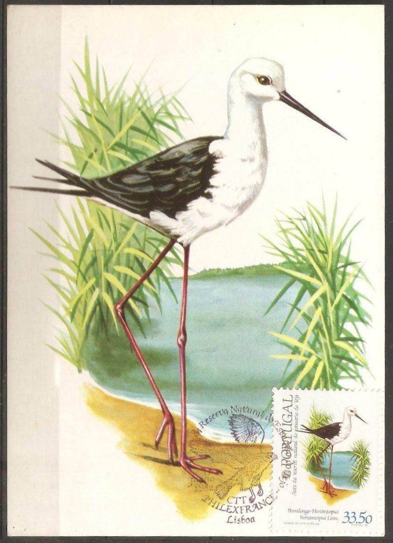 Aves naturais