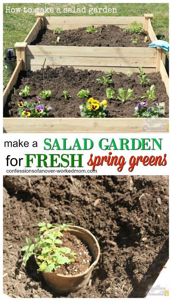 how to make a salad garden for fresh spring greens gardening rh pinterest com