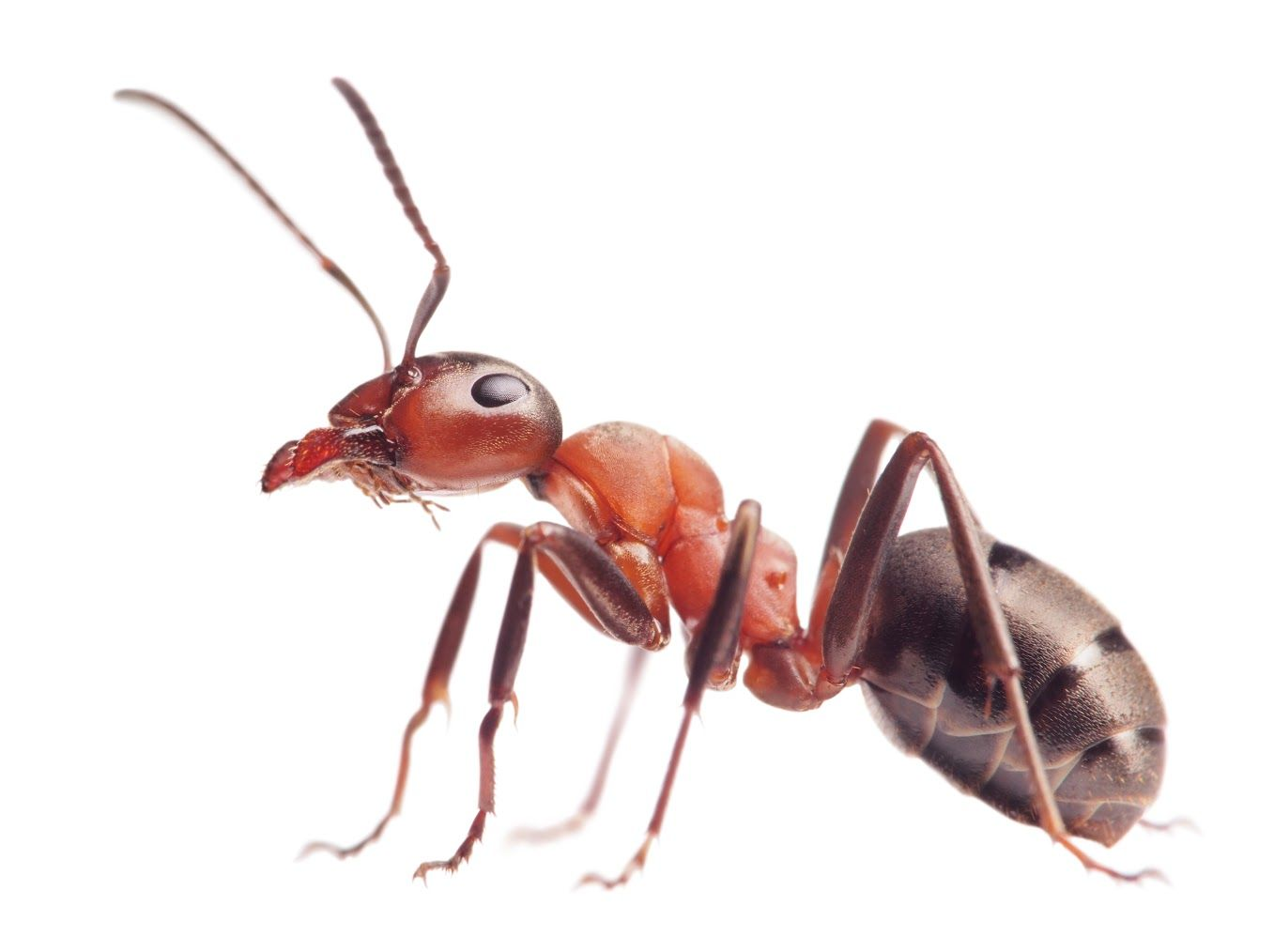ant control u0026 ant killer products do my own pest control those