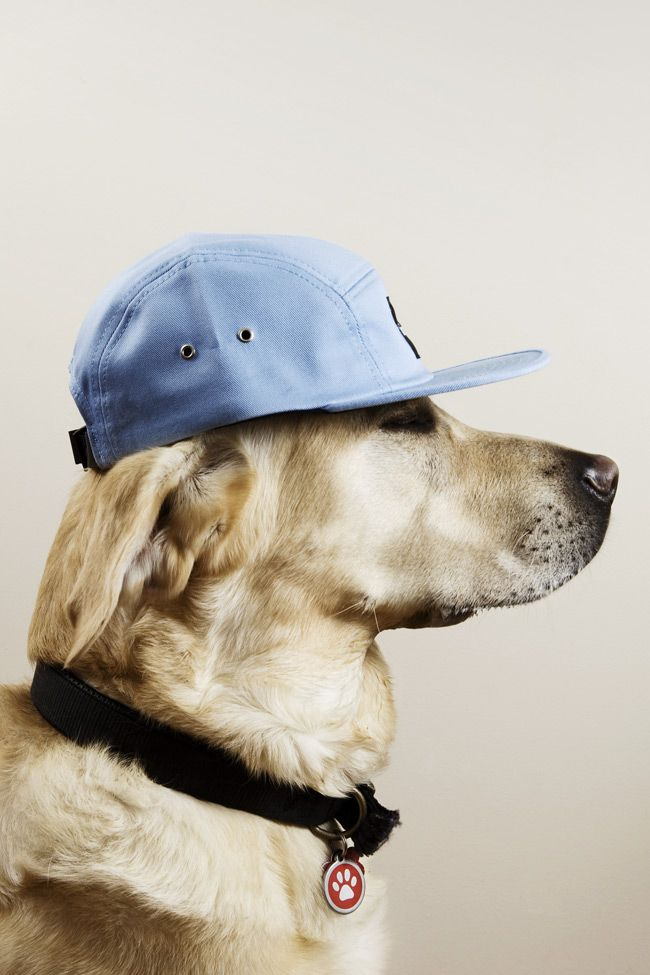 Joseph Dawson for The Chimp Store, Dogs Wearing hats