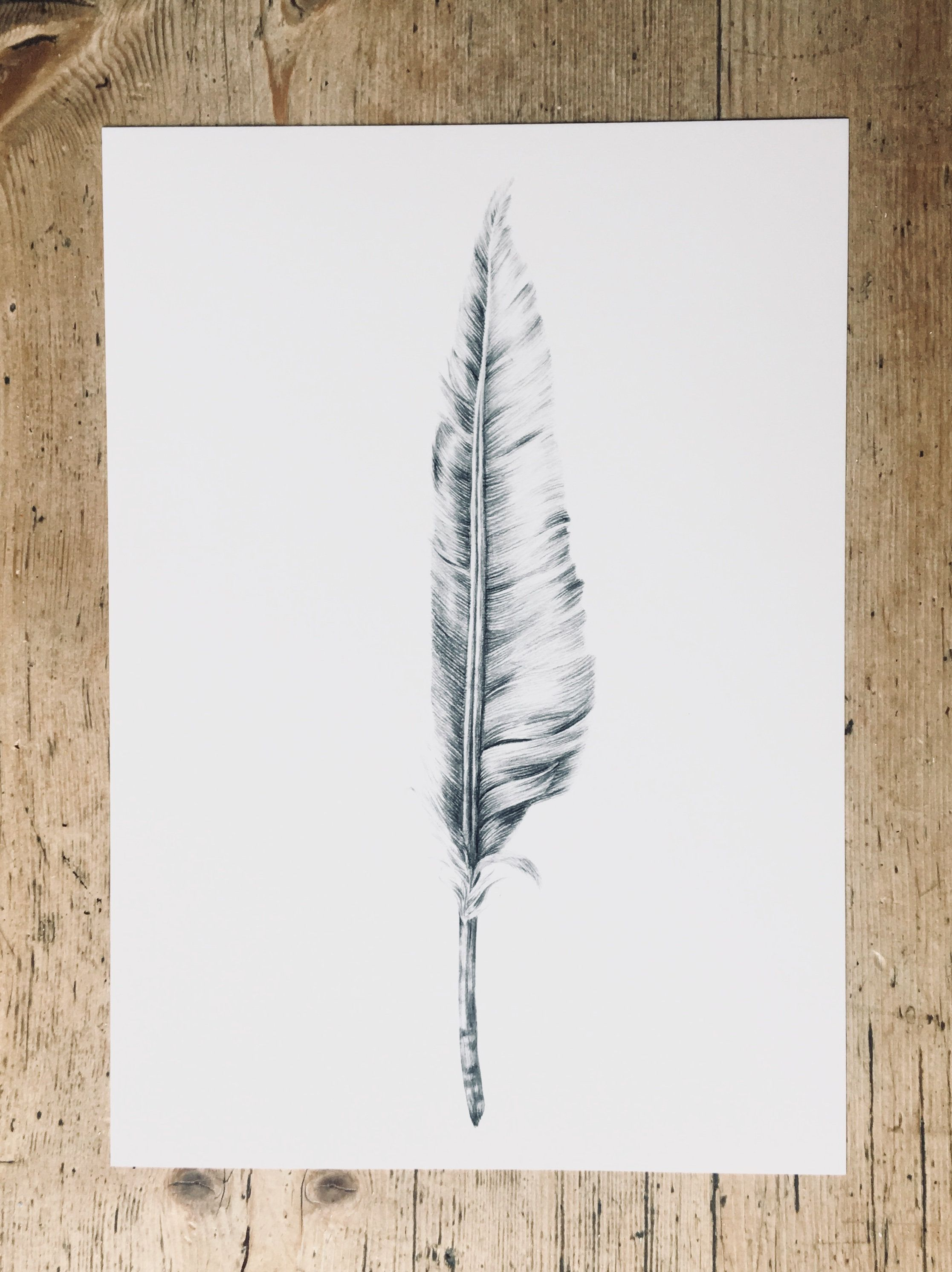 Feather Pencil Drawing Art Print Bird Feather Drawing Print