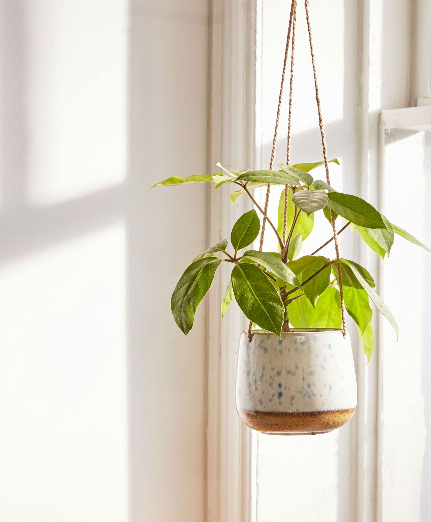 Speckled Ceramic Hanging Planter This Cute Little Planter From Urban
