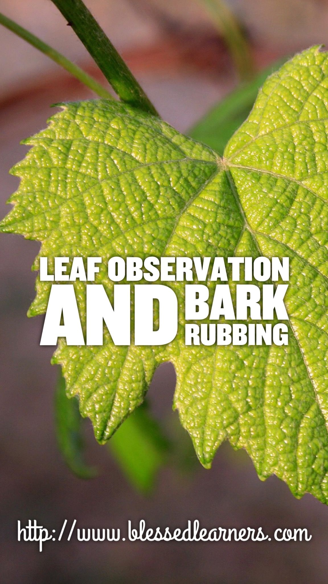 Leaves Observation and Bark Rubbings