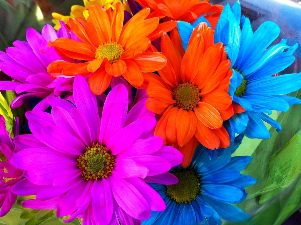 rainbow flowers beach wedding for b fed trap