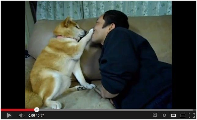 LoL!!! Dog Does Not Want Kisses! :D Watch here: http://awesomeanimals01.blogspot.co.il/2013/06/lol-dog-does-not-want-kisses.html#.UcWDctgSqxA