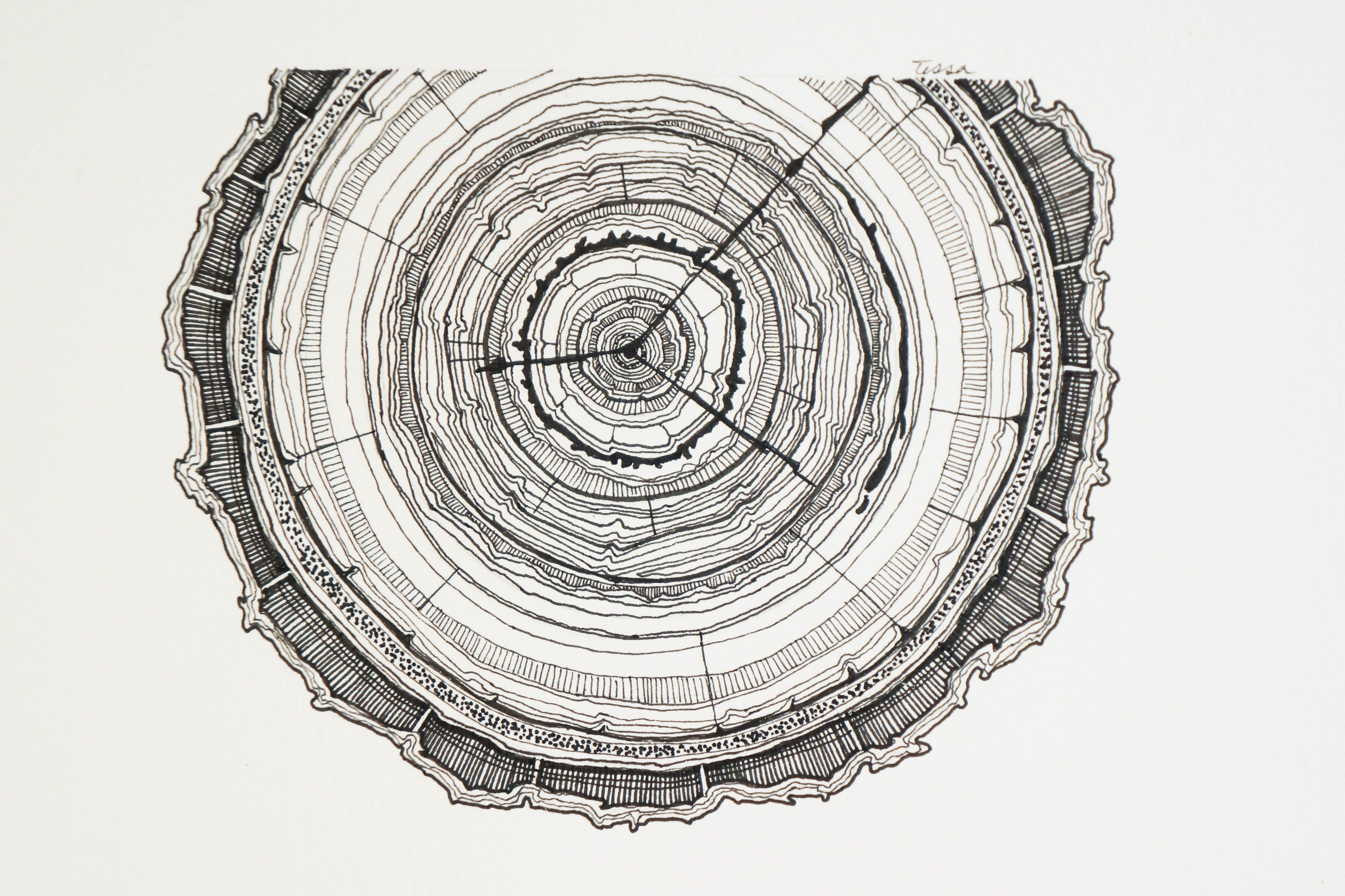 ring tree ring art galleryhip com the hippest galleries tfm rh pinterest com