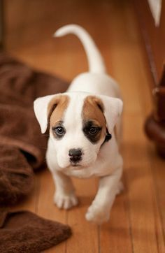 How Cute Is He Via Kaufmannspuppy Cute Animals Dogs And