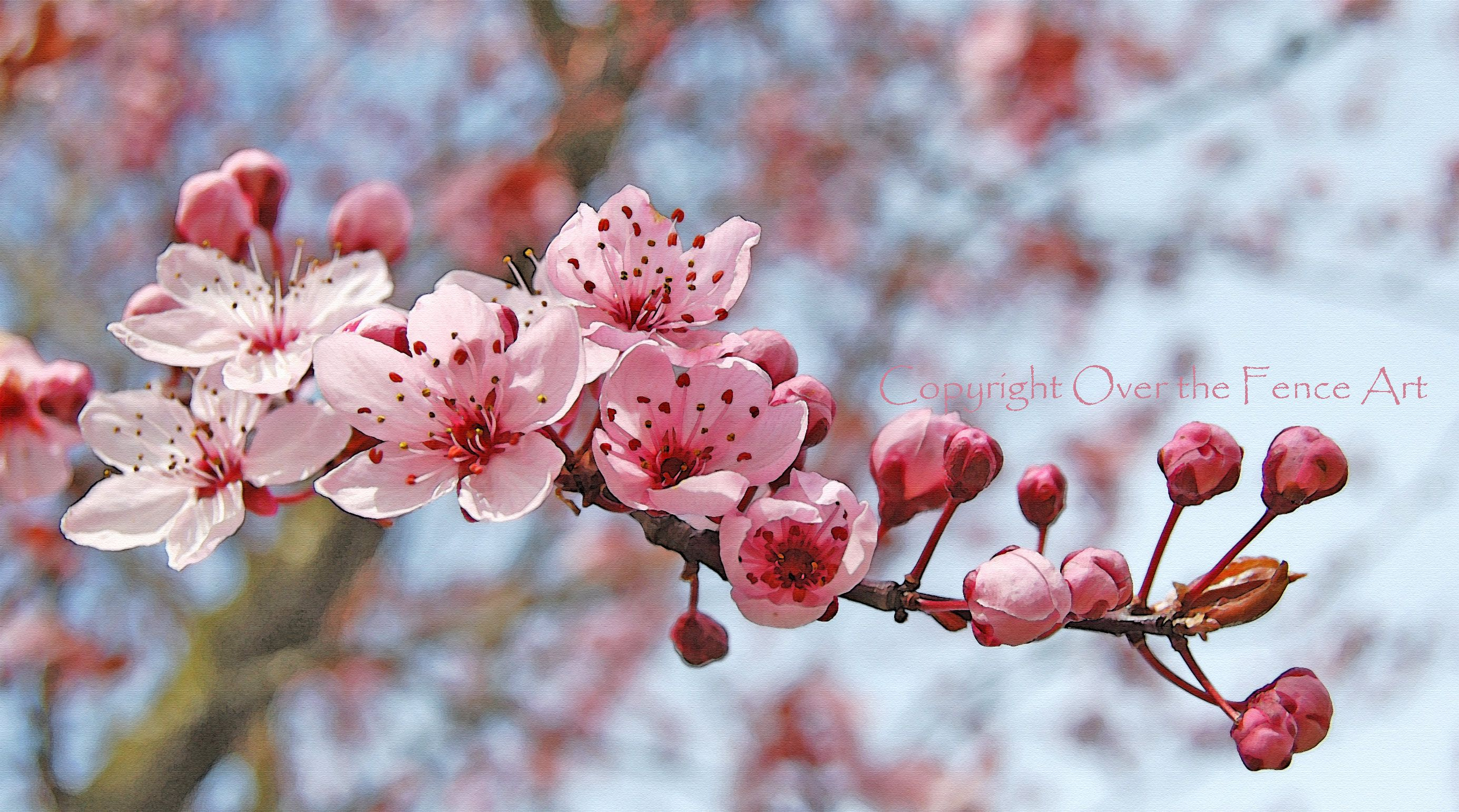 Flower Photography Greeting Card Pink And Cranberry Cherry Etsy Flowering Cherry Tree Flowers Photography Cherry Tree