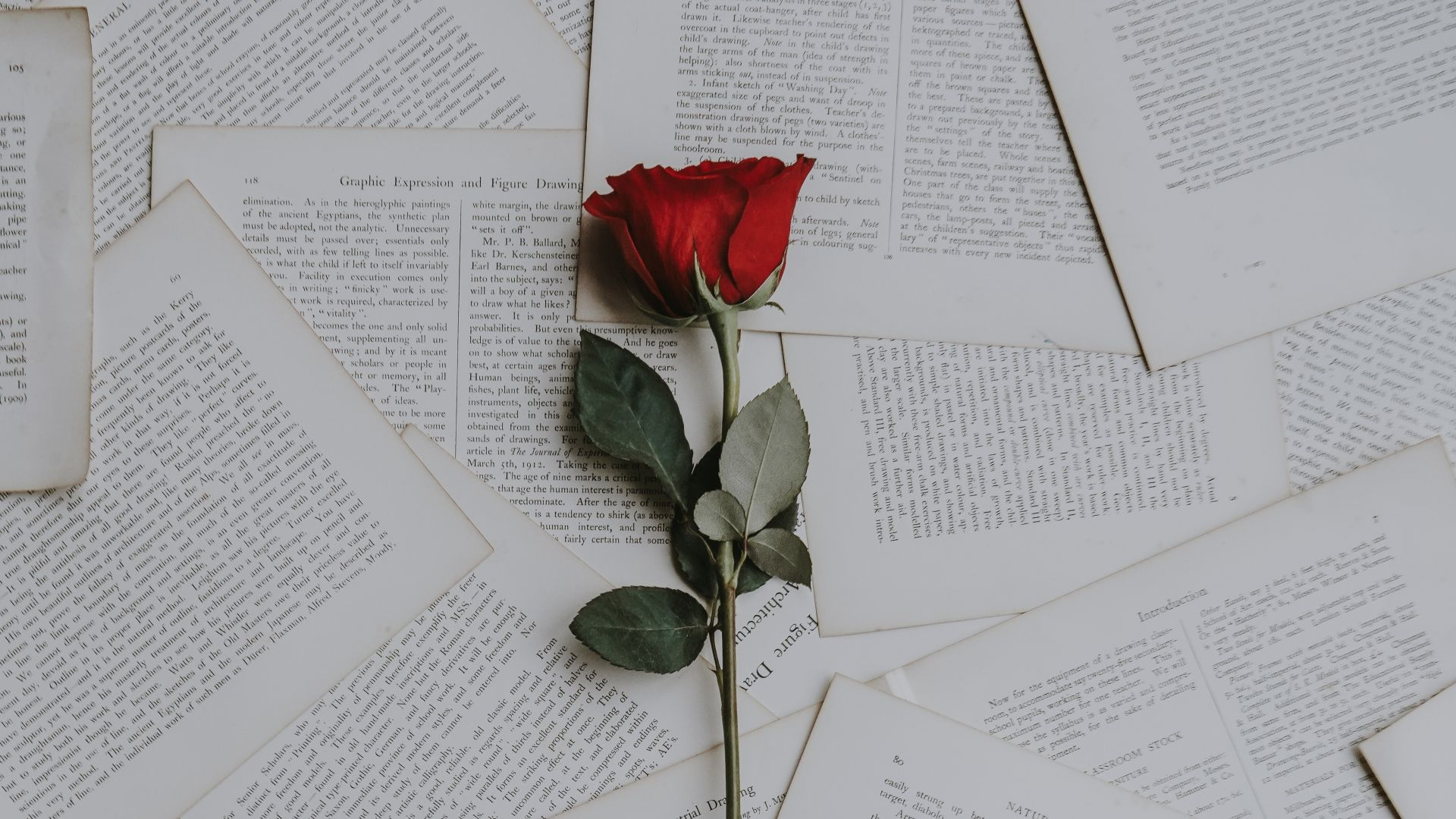 1920x1080 Wallpaper rose, books, texts | Papel de parede do ...