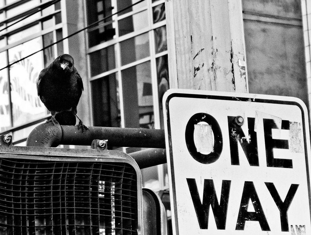 One Way Crow