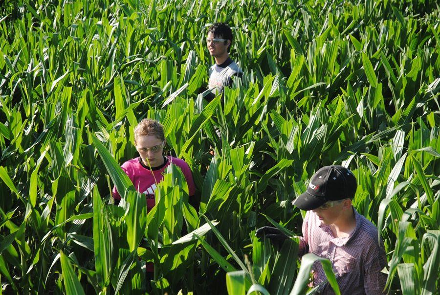 Detassling corn my first job no one understands this